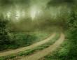 Mglisty krajobraz leśny
