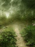 Leśna ścieżka we mgle