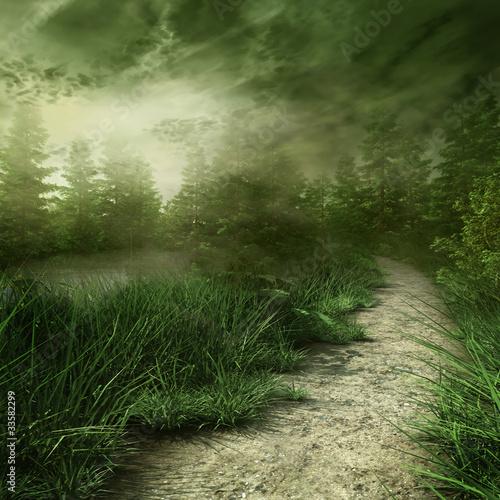 Leśna ścieżka nad rzeką