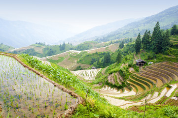 Rice terrace landscape in China (Longji, Guangxi)