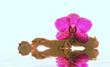 Glow Orchidee
