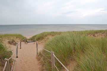 protected sand dunes