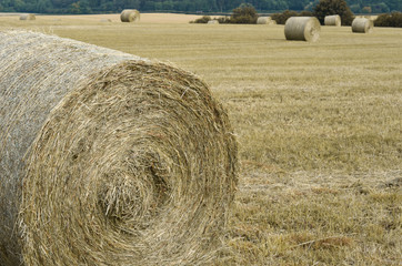 Hay bales at harvest time