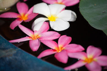 fleur frangipanier zen