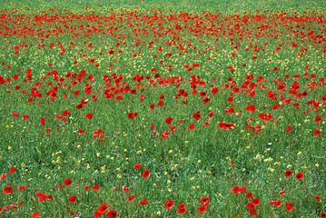 flowering_1