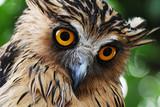 owl face closeup