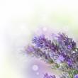 Fototapeten,aroma,aroma therapy,aromatisch,hintergrund