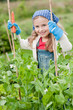 Little gardener in vegetables garden