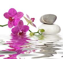 Il vous suffit de belles orchidées