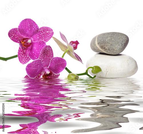 Fototapety, obrazy : Einfach schöne Orchideen