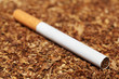 Close up of cigarette which lying on scattered tobacco