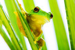 Small green tree frog holding on palm tree