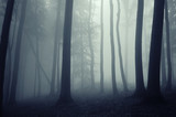 fog in a beautiful forest with elegant trees