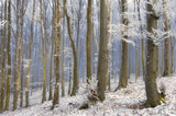 fog between trees in a beautiful frozem forest in winter