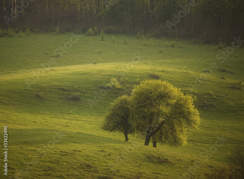 group of trees in a green field at summer at sunset