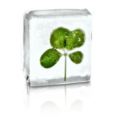 Kleeblatt im Eis