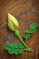 Yellow Rosebud on Wood