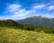 Yellow meadow in mountains
