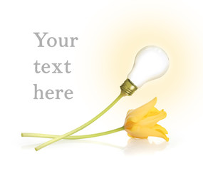 lamp and tulip
