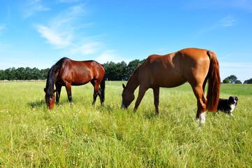 Pferde hüten