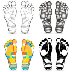Thai foot massage chart isolated on white background