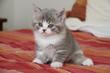 timidité du jeune chaton maladroit