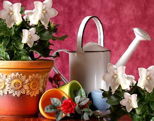 Vasi Colorati con annaffiatoio bianco
