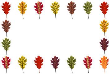Red Oak Leaf border