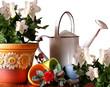 Colori e Giardinaggio