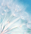 Abstract dandelion flower background - 33673298