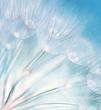 Fototapeten,abstrakt,hintergrund,blühen,blau