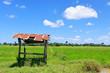 Scenery of rice fields.