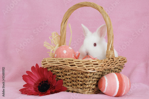 baby bunny in a basket