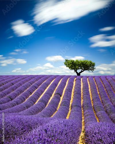 Lavande Provence Francja / Lawendowe pole w Prowansji, Francja