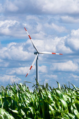 Windenergie in einem Maisfeld (Green Energy)