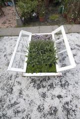 finestra con piante