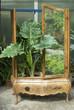 vecchio mobile con pianta