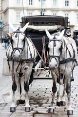 Fiaker Horses