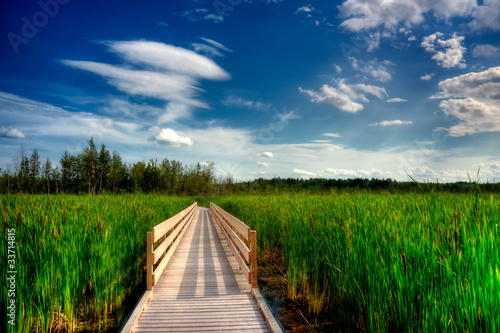 Wooden Boardwalk Cuts Through Marsh