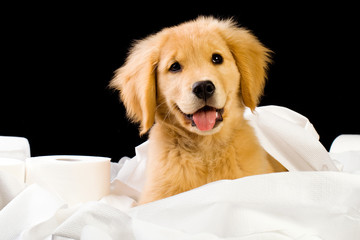 Happy Puppy in a pile of soft toilet paper