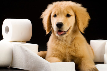 happy puppy with soft toilet paper roll
