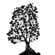 silhouette of a deciduous tree