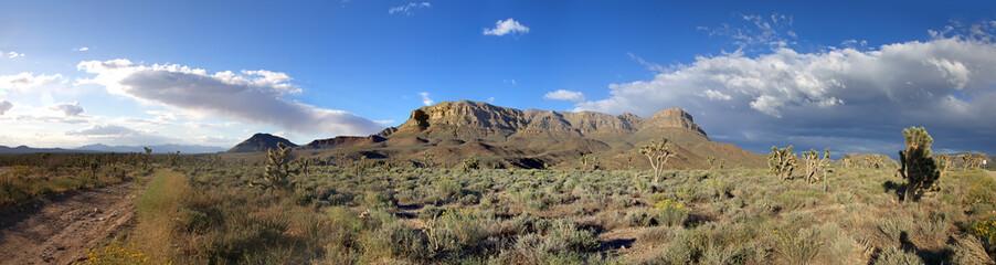 Panorama of american prairie with Joshua trees