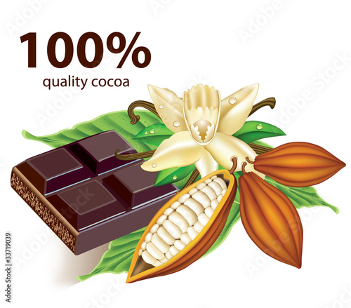 Chocolate vanilla flower and fruit of the cocoa