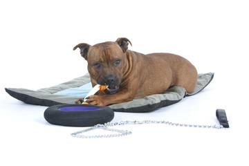 chien en train de mastiquer un jouet