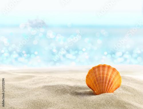 Shell an einem Sandstrand