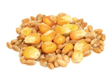 Grains de céréales