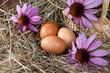 composizione con uova e fiori