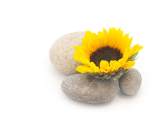 Pebbles and flower