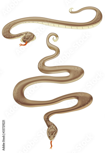 brown snake in two poses.clipping path included